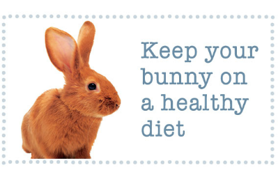 Keep your bunny on a healthy diet