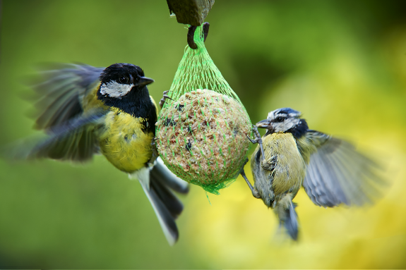 Choosing the Right Wild Bird Food  Wilkolife