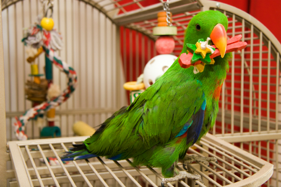 Image result for domestic bird