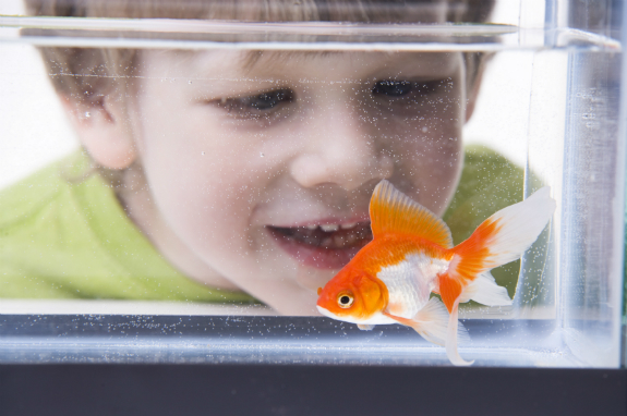 Choosing Your Pet Fish Wilkolife