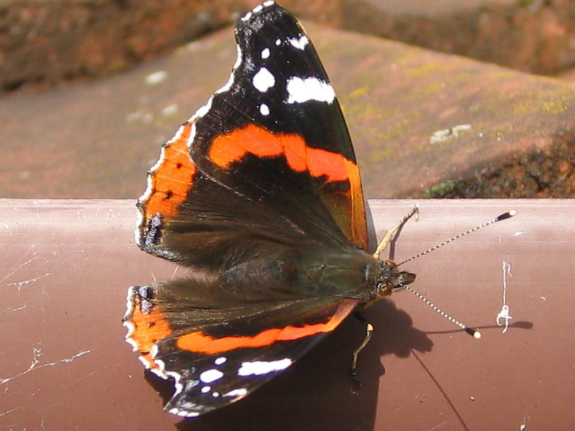 Butterfly on pipe