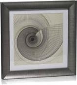 Grey spiral shell picture