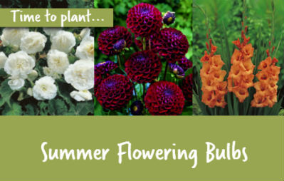 Time to plant summer bulbs