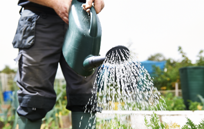 watering allotment