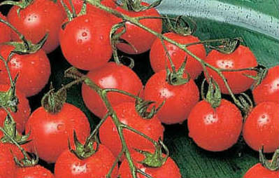 tomato week featured image