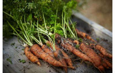 CARROTS Compost guide