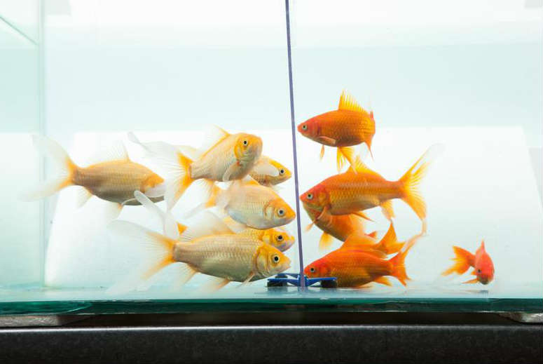 Tips For Keeping Your Fish Happy And Healthy Wilkolife