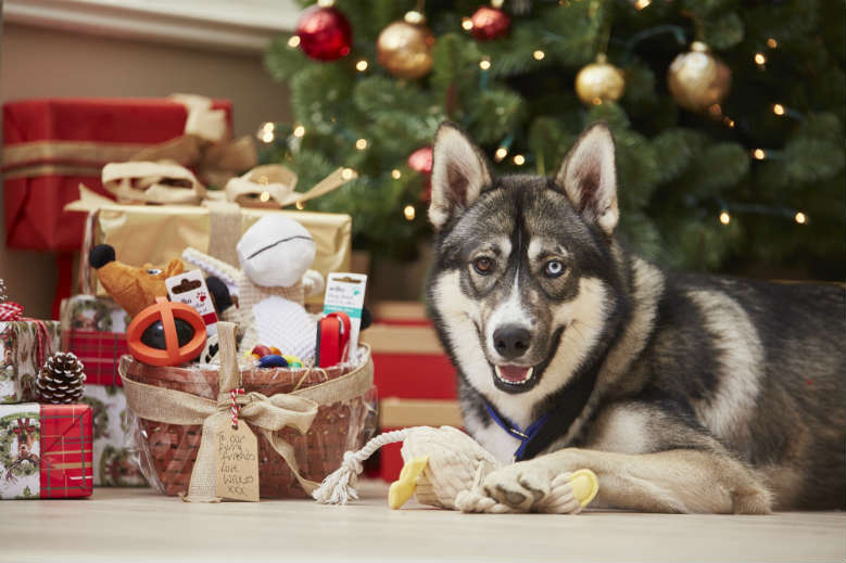 Don\'t Forget Your Pets\' Gifts this Christmas!   Wilkolife
