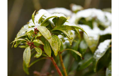 snowing in the garden