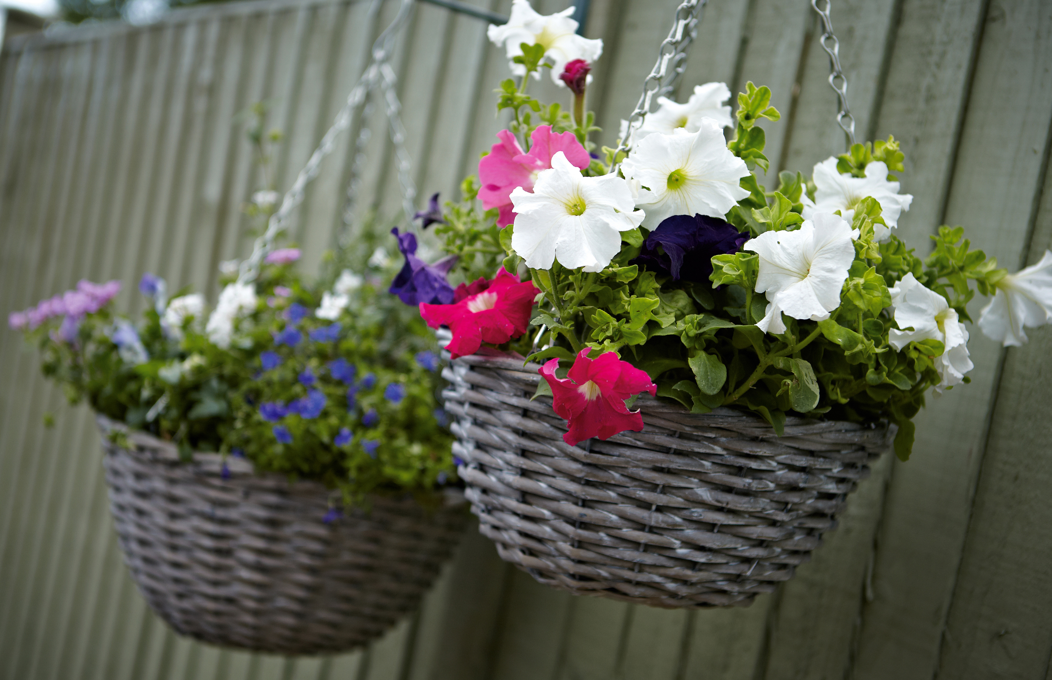 ss13_016_017_Hanging_Baskets1354