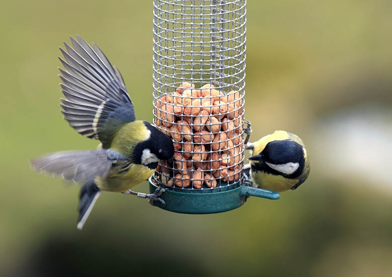 peanuts and feeders